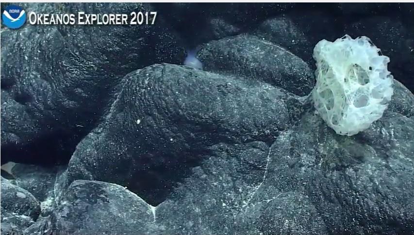 Noaa Ship Okeanos Explorer Live Cam Selected Stills